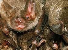 How has Coronavirus affected you ?-bat-223-jpg
