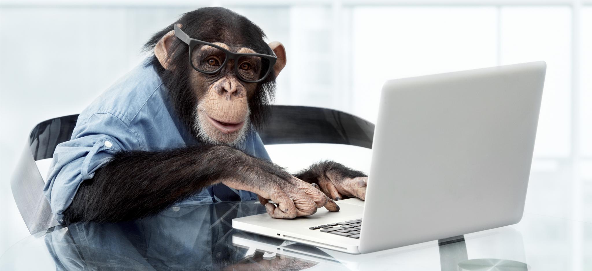 End Monkey Business Now!-monkey-jpg