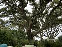 The Tree Hugging Thread-ff7df394-c531-4f62-98e6-39923771e0f0-jpg