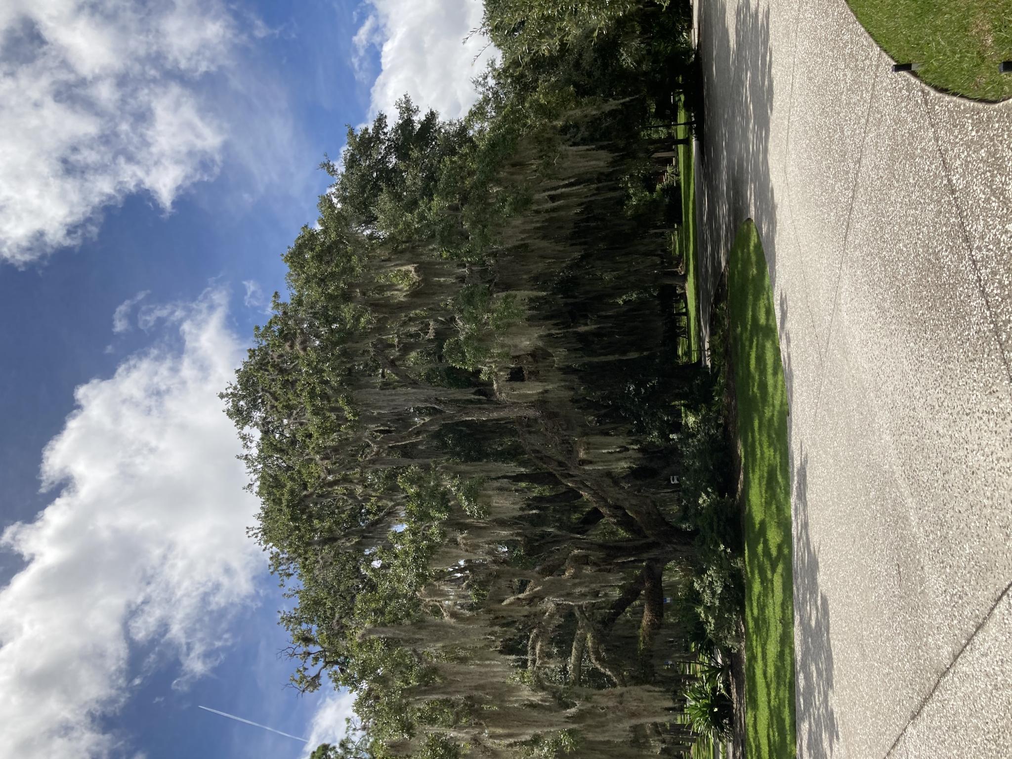 The Tree Hugging Thread-fd02fd85-40e0-4ea5-ba19-c4848fde75f3-jpg