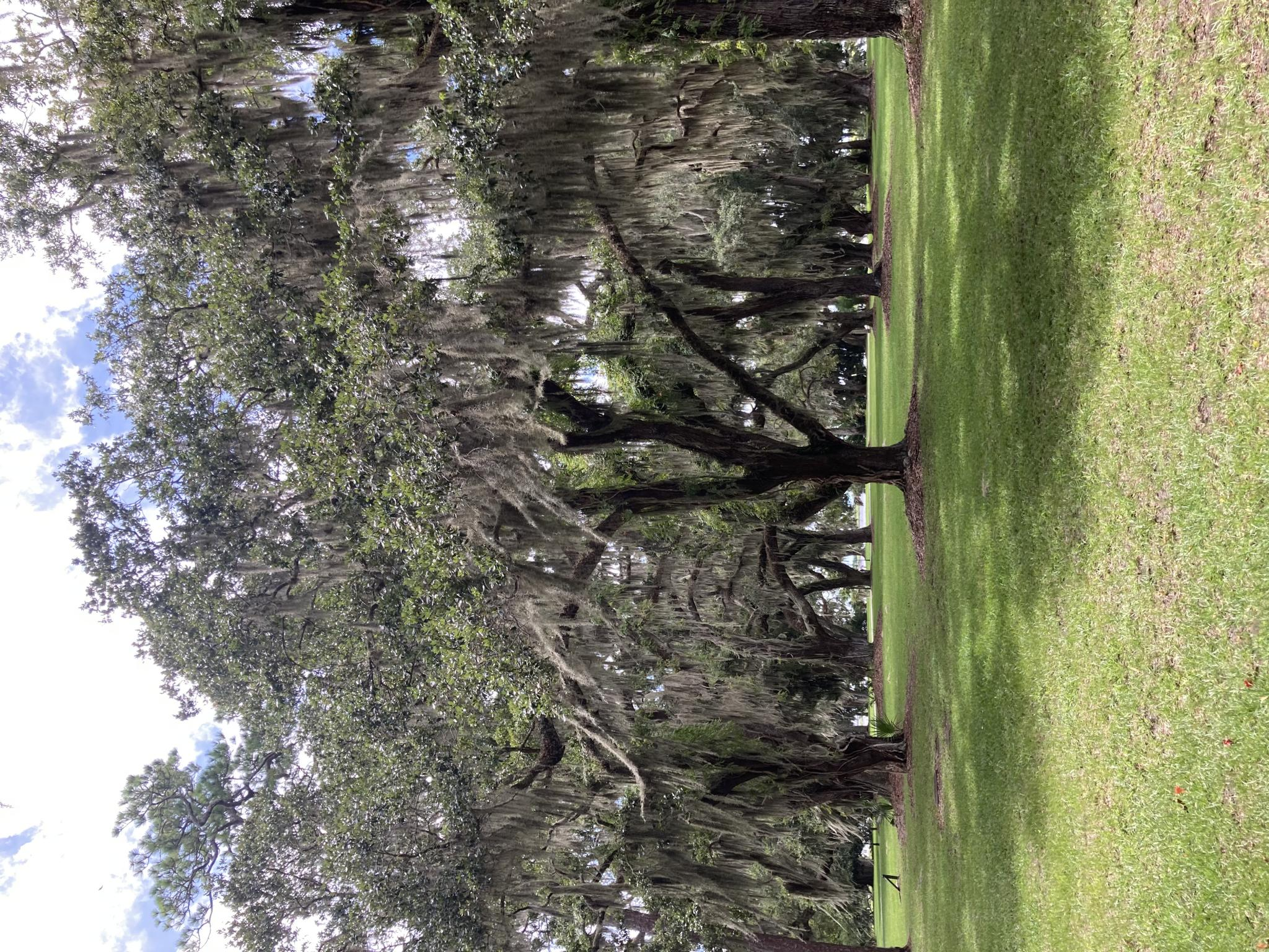 The Tree Hugging Thread-66b4ffcd-0e75-4616-9fe8-e1a22c03f4f1-jpg