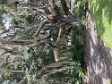 The Tree Hugging Thread-861905e8-7d06-420b-965e-f757c09e86a4-jpg