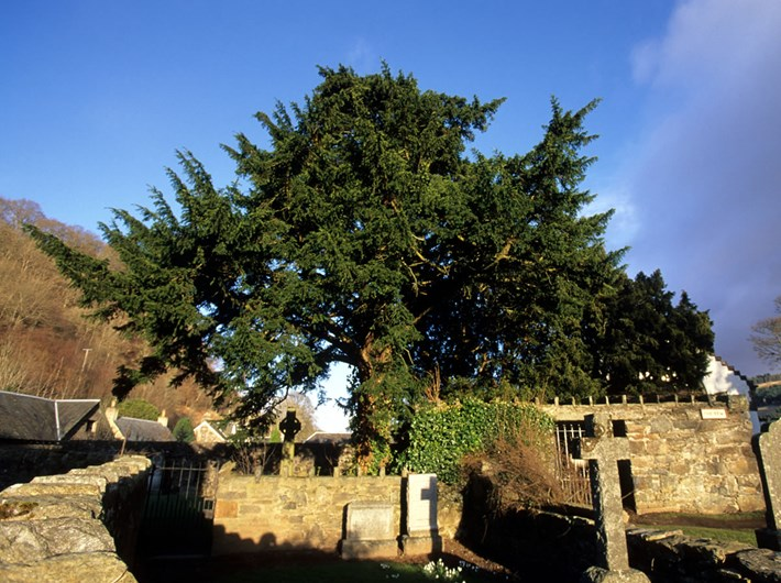 The Tree Hugging Thread-a39d59e3f2e59bde4cced7a132e63b316c8ee5ab-jpg