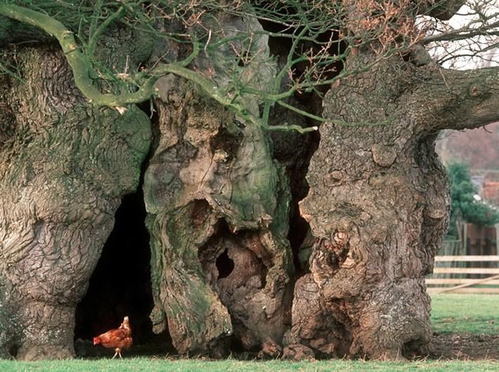 The Tree Hugging Thread-bfa8480cb906418d458b817fda6d672cb38dfee1-jpg