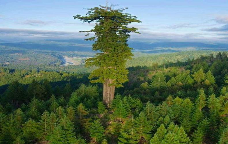 The Tree Hugging Thread-5ae46b72d776c_big-jpg