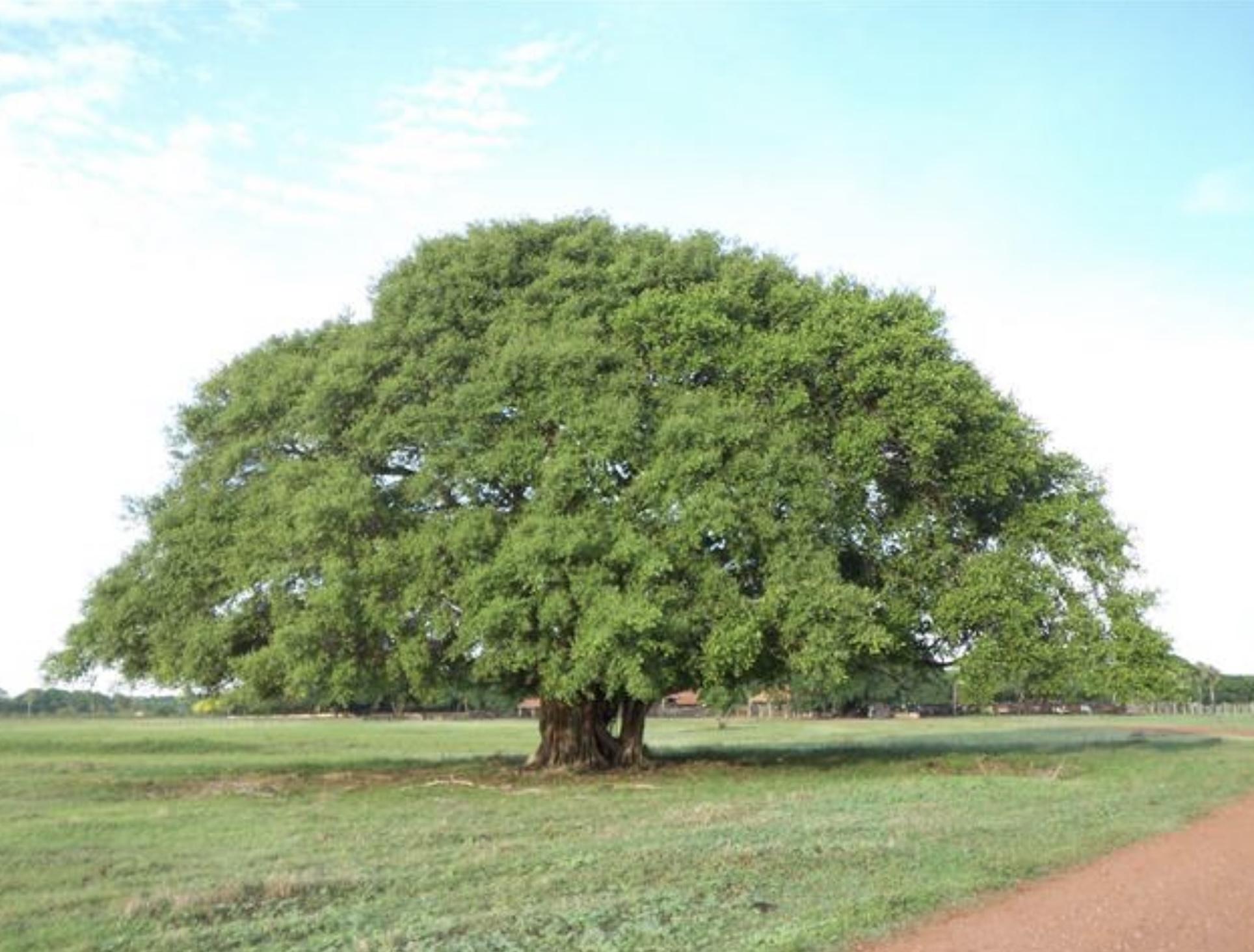 The Tree Hugging Thread-328d1916-289e-4f49-9bab-11314443d2a6-jpeg