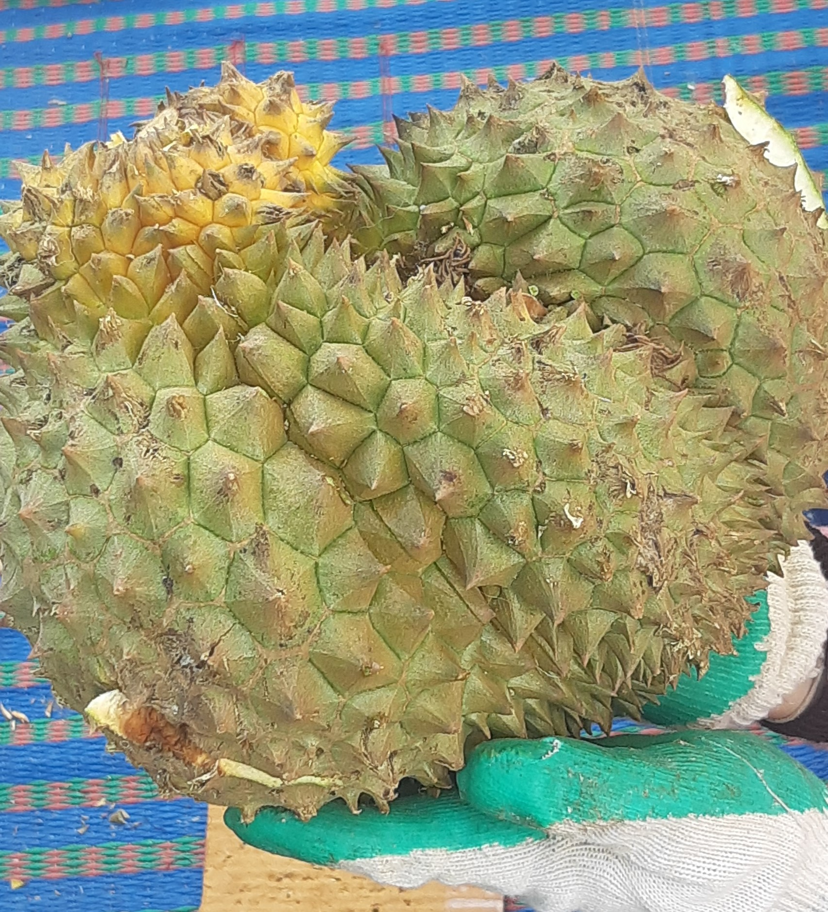 What it is?-durian-jpg