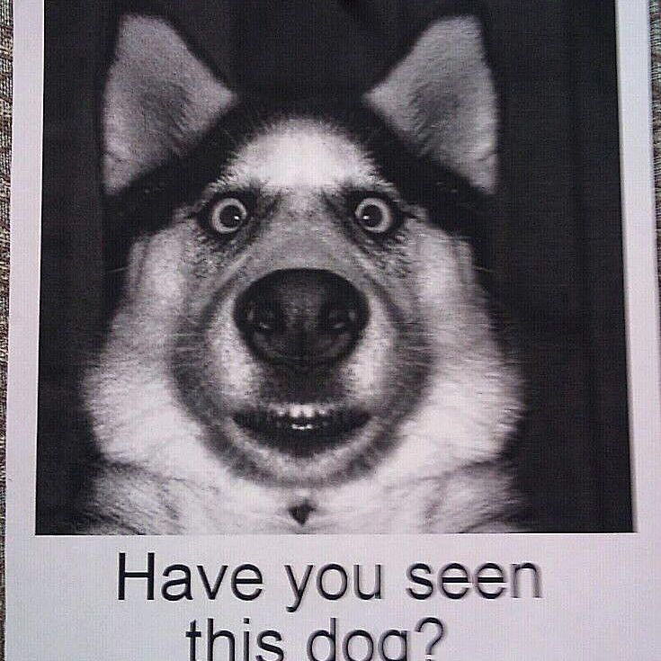 Best Poster ?-lost-dog-58b8c9475f9b58af5c8c7aec-jpg