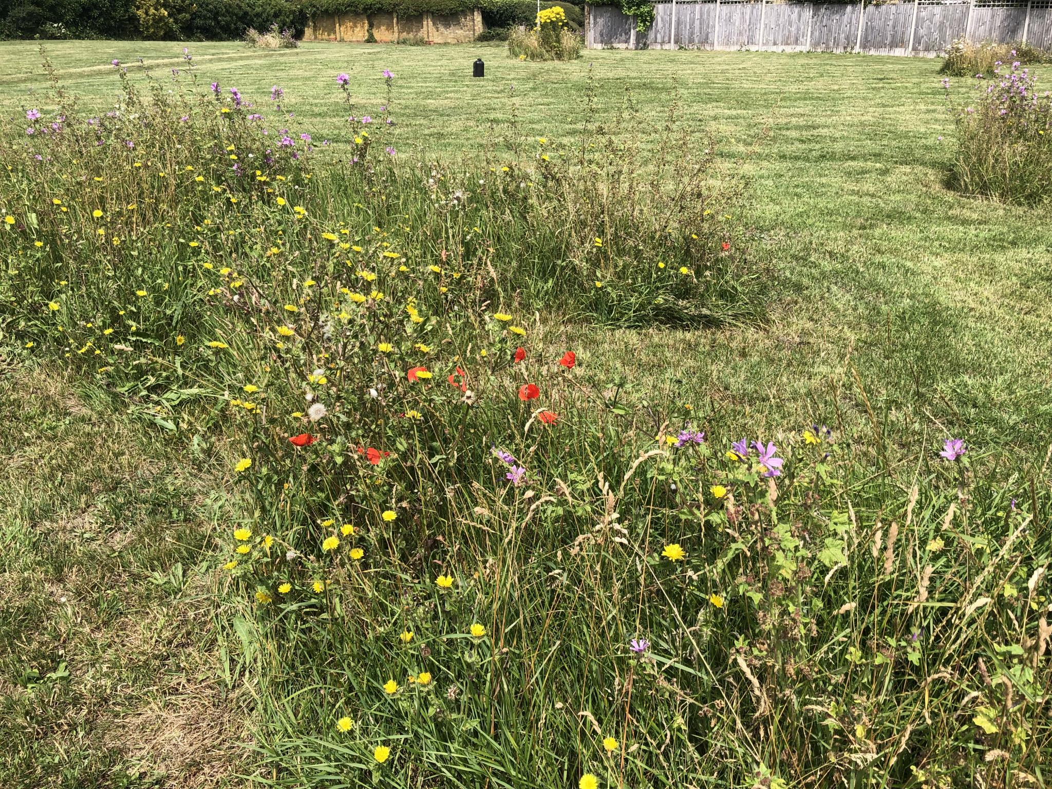 """""""Re-wilding"""" a patch of neglected land in the UK-458ad22a-65e3-49b5-8454-86654156399e-jpg"""