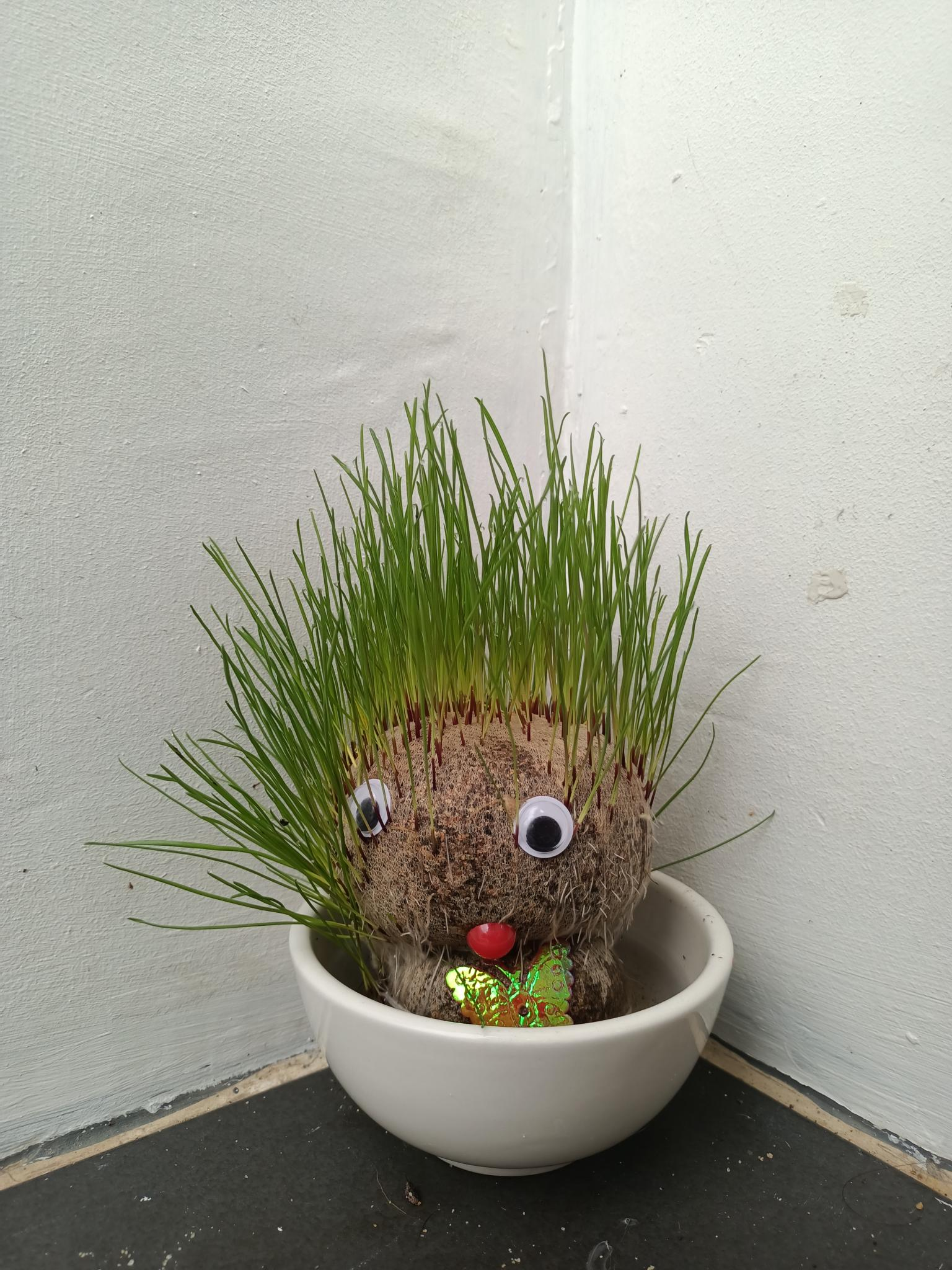 Watch Grass Grow With Armstrong-img20210908071815-jpg