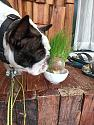 Watch Grass Grow With Armstrong-img20210912082450-jpg