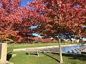 Canadiana Winter and Summer pics-73533133_10158637741493306_2966852795489058816_n-jpg
