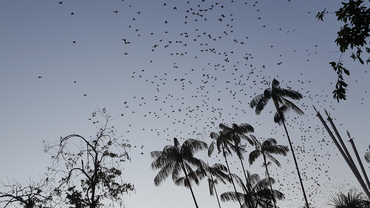 The Amazon-birds-jpg