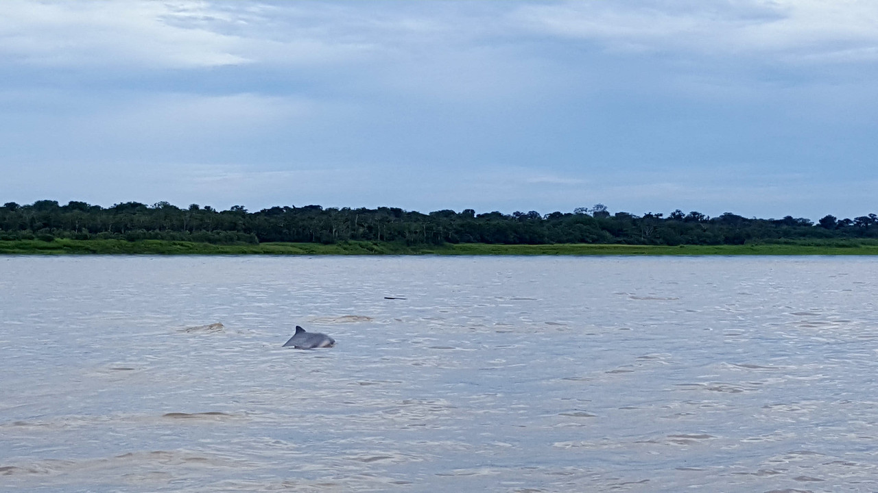 The Amazon-dolphin-jpg