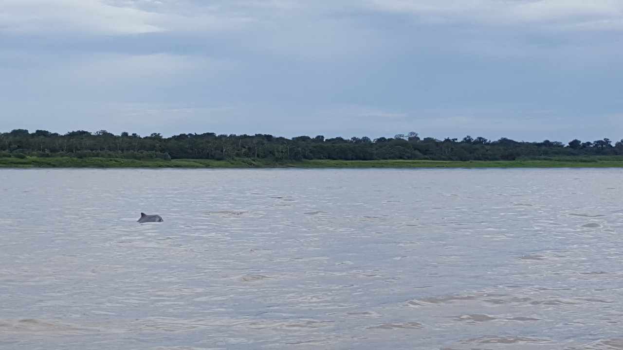 The Amazon-dolphin-2-jpg