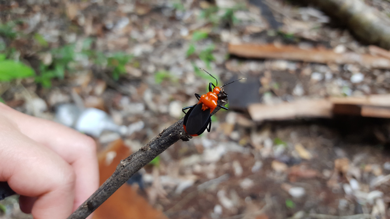 The Amazon-insect-6-jpg