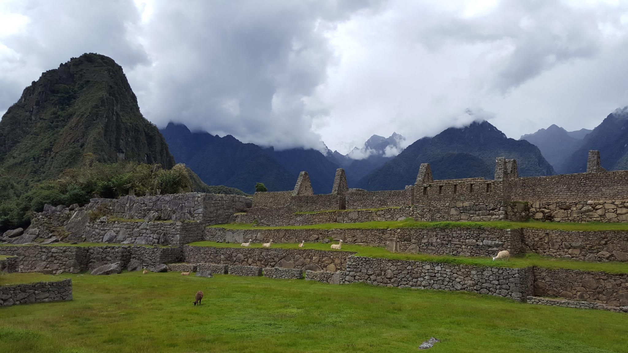 Peru: Lima, Cusco and Machu Picchu-llamas-machu-jpg