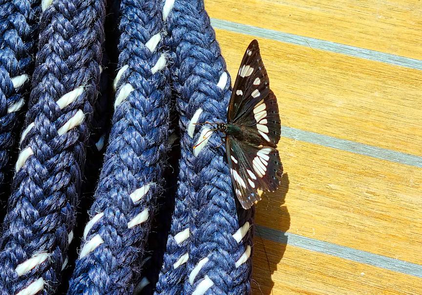 Week Sailing in Croatia-white_admiral-jpg