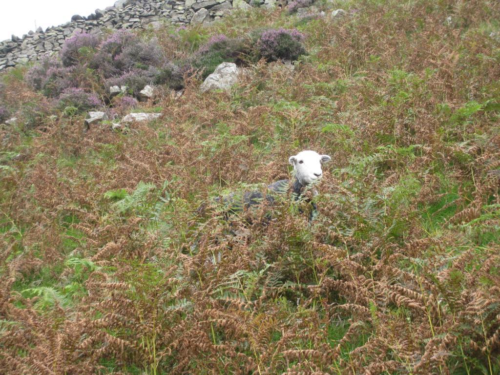 Snowdonia Pics-img_1344-jpg