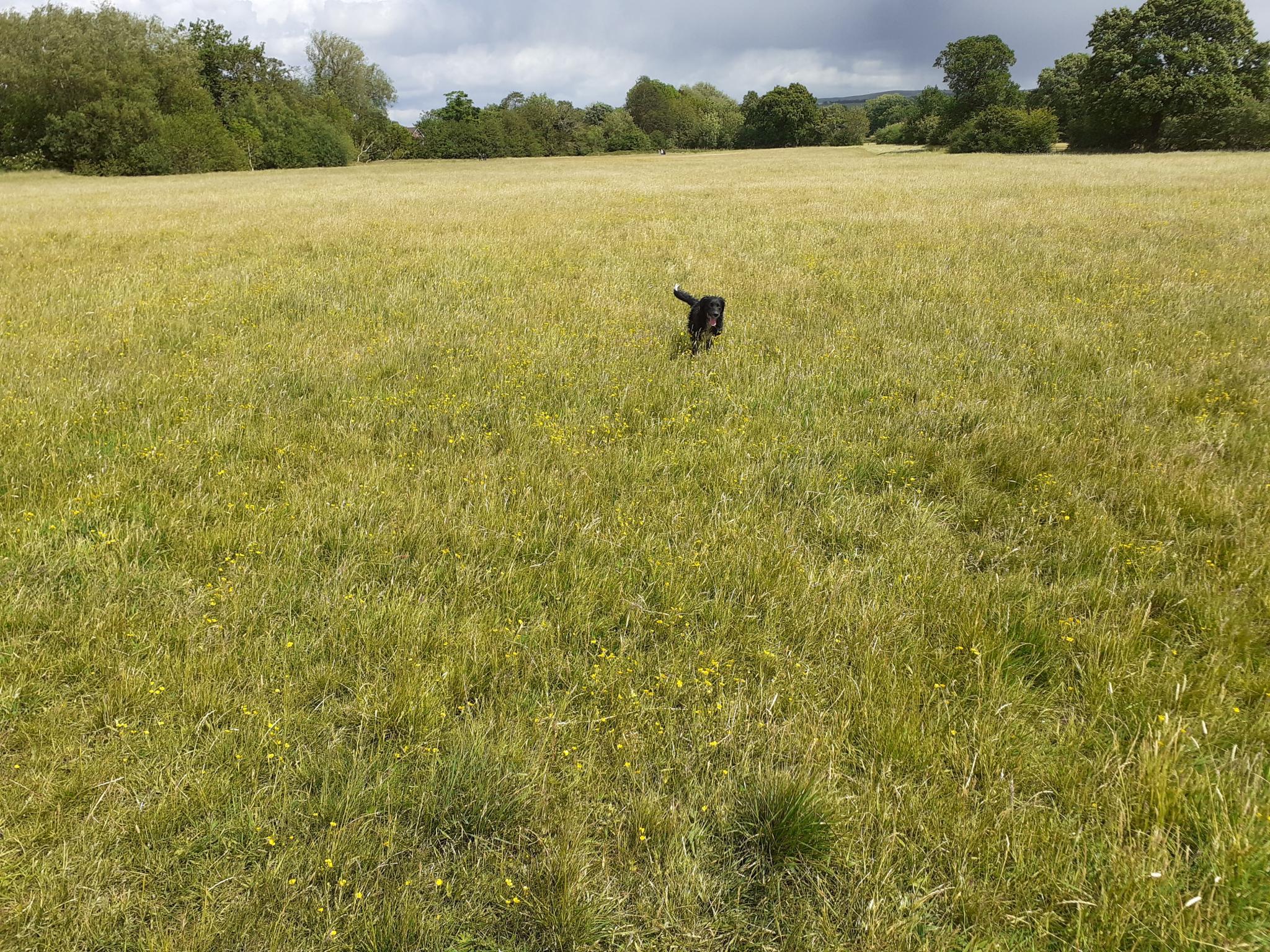 Spot the dog through the English seasons.-20200605_142726-jpg