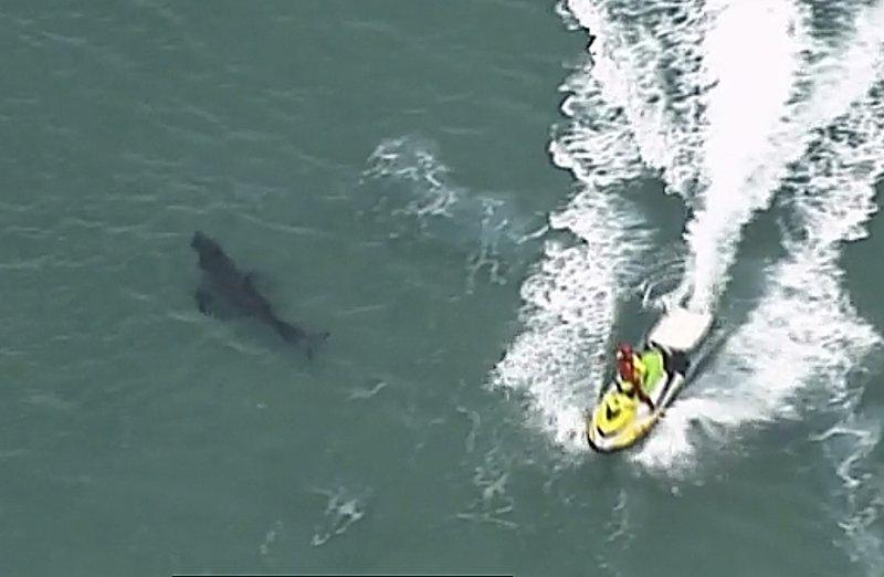 10-foot great white shark kills surfer in Australia-800-jpeg