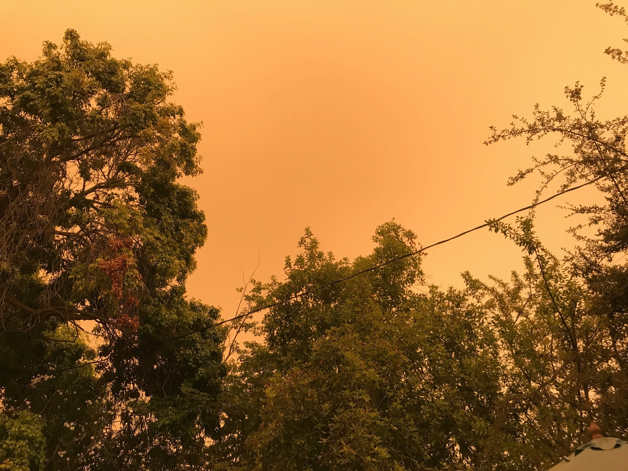 The entire Western US is ablaze in massive wild fires-118958091_10221825815368471_2867594634875036215_o-jpg