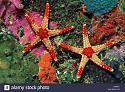 Airline News-red-tile-starfish-jpg