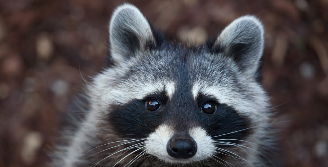 Council approves proposal to rename Coon Island-shutterstock_599100035-jpg