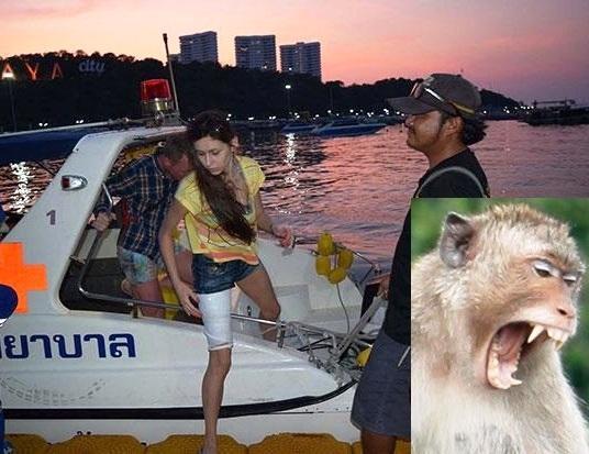 Russian Woman Attacked by Monkey on Koh Larn, Pattaya